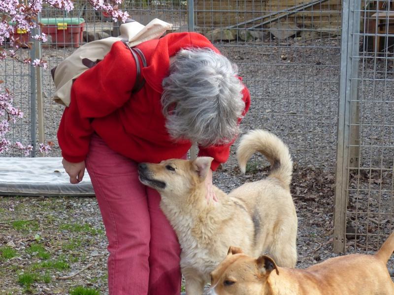 Pongo, chien des rues, né en 2009, très affectueux !! 553155P1080292