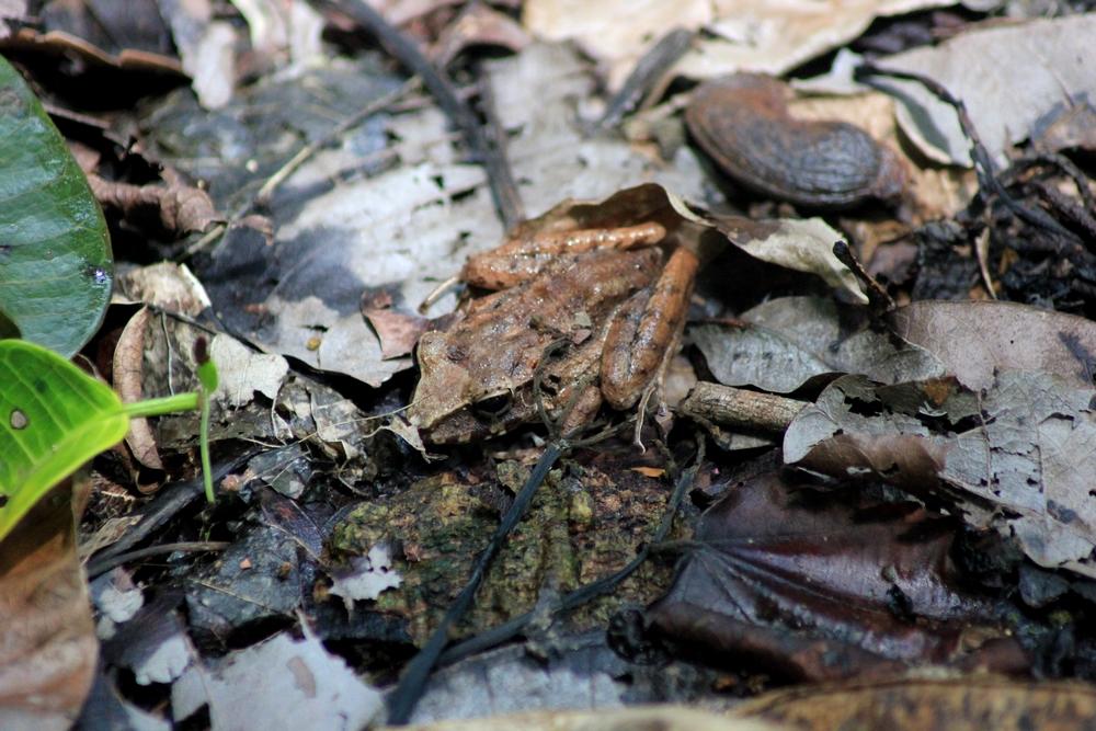 15 jours dans la jungle du Costa Rica 554121crafitz1r
