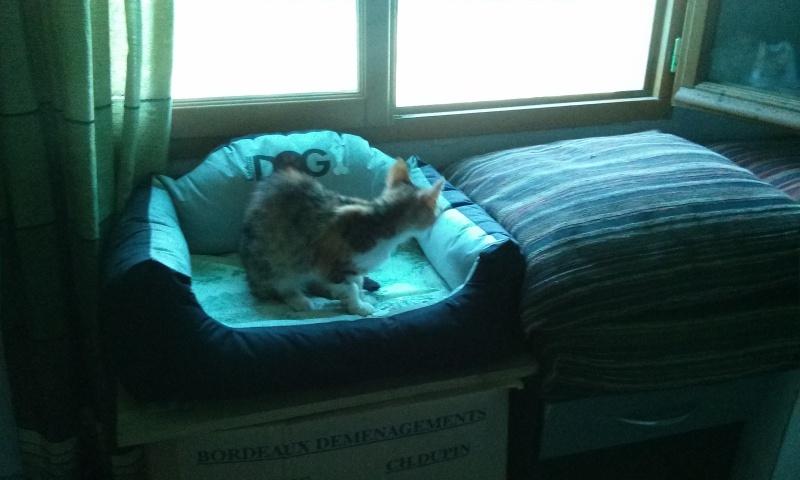 DUCHESSE - chatte femelle, née 2011/2012, borgne - (PASCANI) - adoptée par Chantal Pascal (dpt 63) - Page 3 5543956120