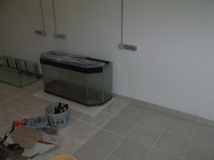 aménagement de ma nouvelle fishroom 556657DSCF4859