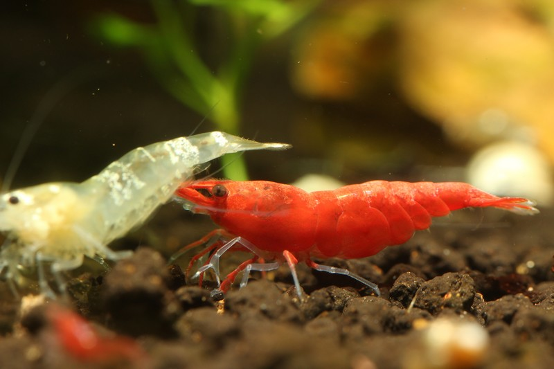 Mes bacs, une passion: l'aquariophilie!! 557909IMG9938