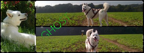 Balade avec chiens autour de Longwy 558046ghosttt