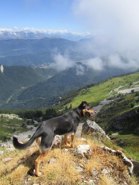 Kami, chien de randonnée - Page 18 560628IMG2147