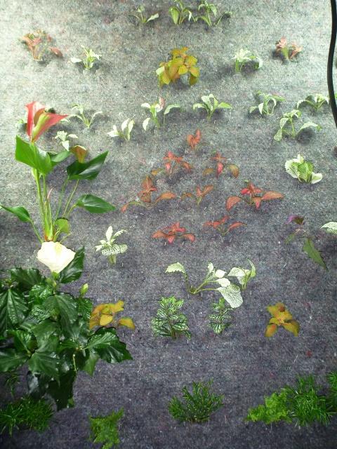 Le nouveau mur végétal de Olivetzou (projet fini à 98%) enfin les leds - Page 2 571263P1010091
