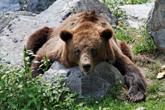 Zoo du Pal (Allier: Dompierre sur Besbre) 571493IMG_6297_DxO__640x480_