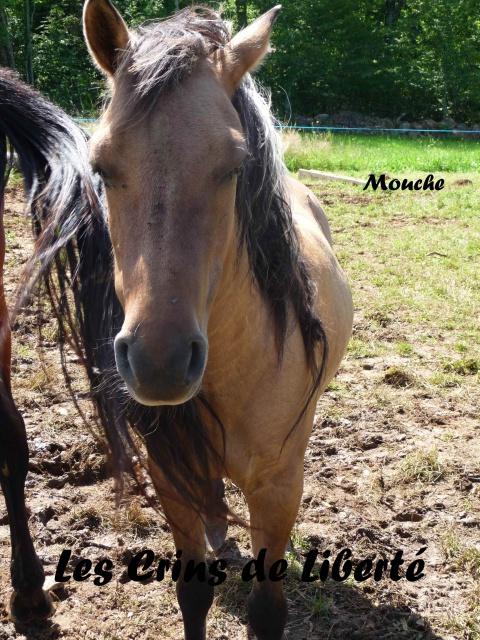 (Dept19) MOUCHE, Ponette ONC 14 ans, sauvé par Dino27 !!! (Sept 2014)décédé - Page 3 573000P1040520