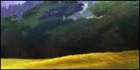 Les Etalons des Plaines. 576659foret