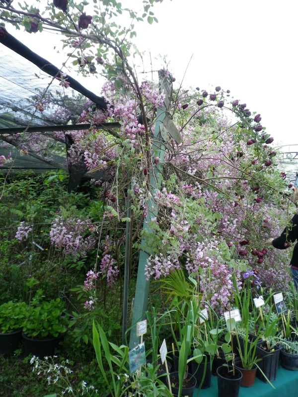 (40) Plantarium et chemin de ronde - Gaujacq 577302IMGP4509