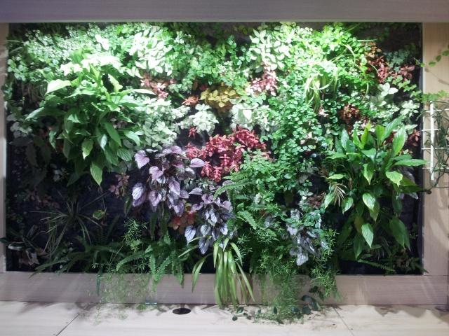 Le nouveau mur végétal de Olivetzou (projet fini à 98%) enfin les leds - Page 4 57953320130823144019