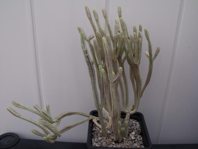 Mes succulentes 2014 579858011