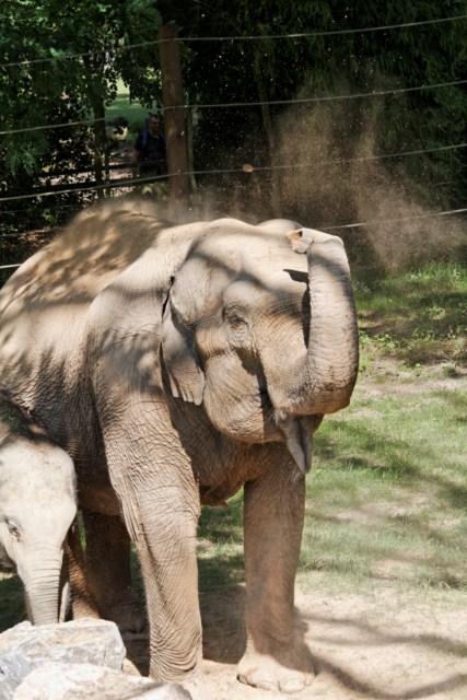 Zoo du Pal (Allier: Dompierre sur Besbre) 580277IMG_6404_DxO__640x480_