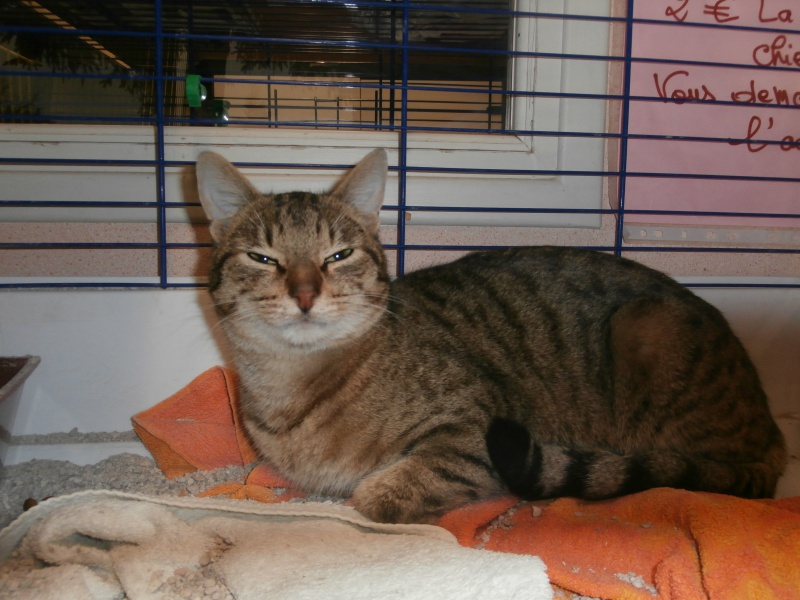 Azalé ( chat mâle tigré ) 584554P2172339
