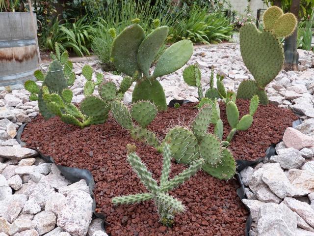 cactus 585757P1140940
