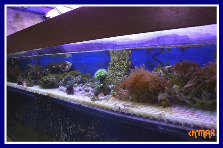 ce que j'amène en coraux a orchie  588002PXRIMG0006GF
