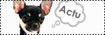 Forum Chihuahua : Mini Dog's Chihuahua 598681icone_lya_info