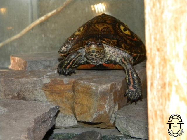 Regroupement des photos d'aquaterrariums espèces palustres 601594kinao2