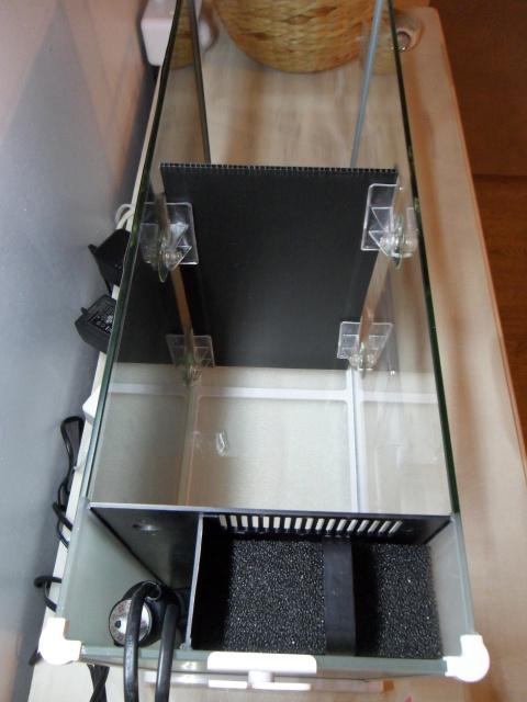Nano aquarium Fluval Spec V 19L [mise en eau] 602515SAM1702
