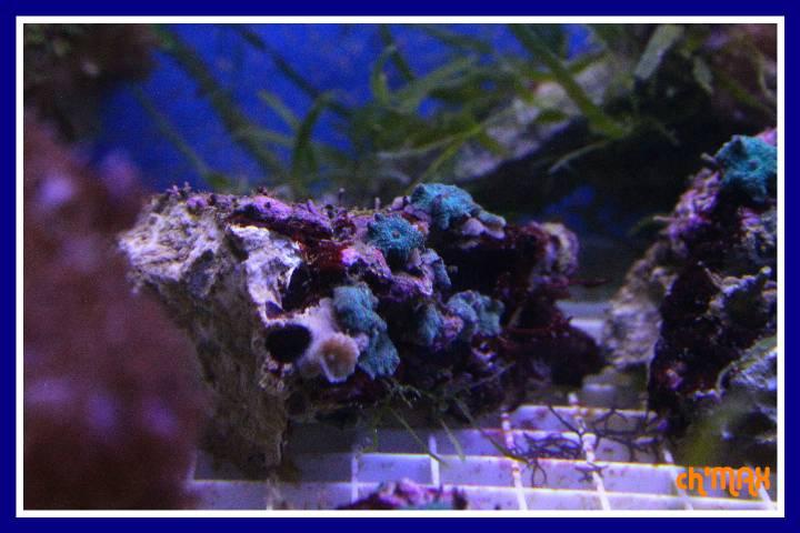 ce que j'amène en coraux a orchie  602535PXRIMG0023GF