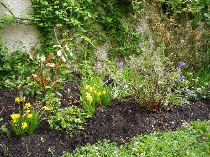 avril, jardin fébrile - Page 4 603995IMGP4045