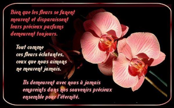Bon Dimanche 605072312419887513Zrd5ktGM