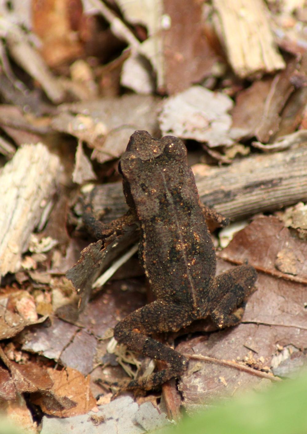 15 jours dans la jungle du Costa Rica 605247valiceps4r