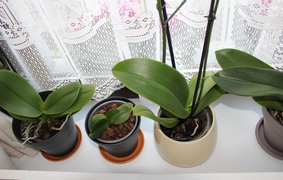 Les orchidées chez moi 608282IMG9670