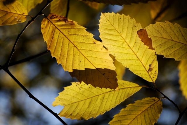 Les couleurs de l'automne 615299IMG_7595_DxO__640x480_