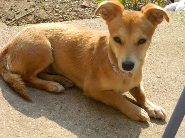 Arika, adorable croisée Pinscher née le 15/07/2012 en FA (89) 616640DSCN1377