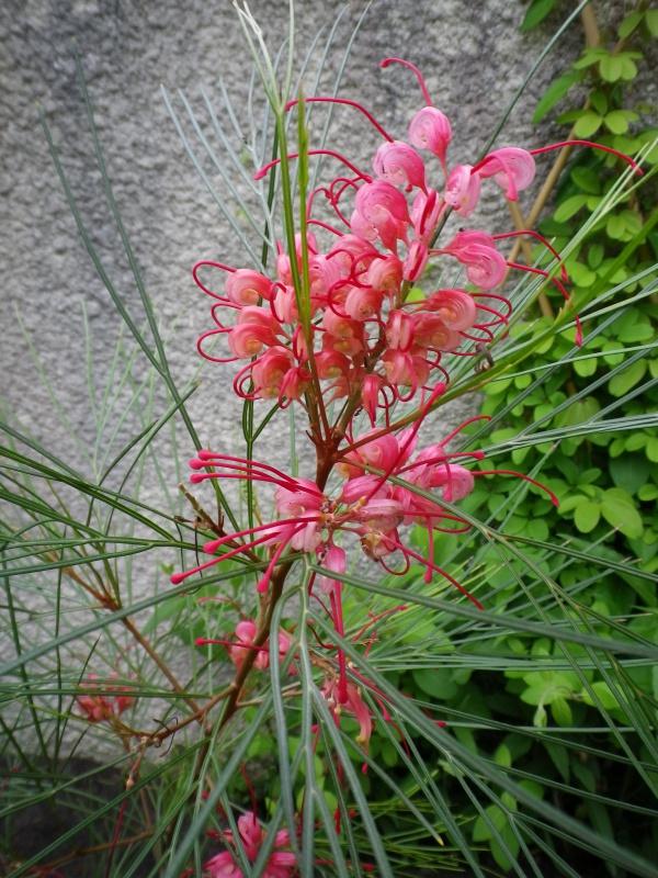 joli mois de mai, le jardin fait à son gré - Page 4 619035IMGP4606