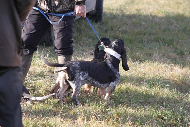 Brevet de chasse sur lièvre Marnay (71) 7 et 8 mars 2015 624078IMG6514