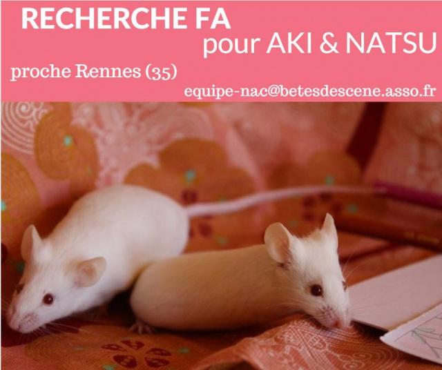 Recherche nouvelle FA pour AKI et NATSU (souris) 6251941365412917358870033500461489611425263720898n