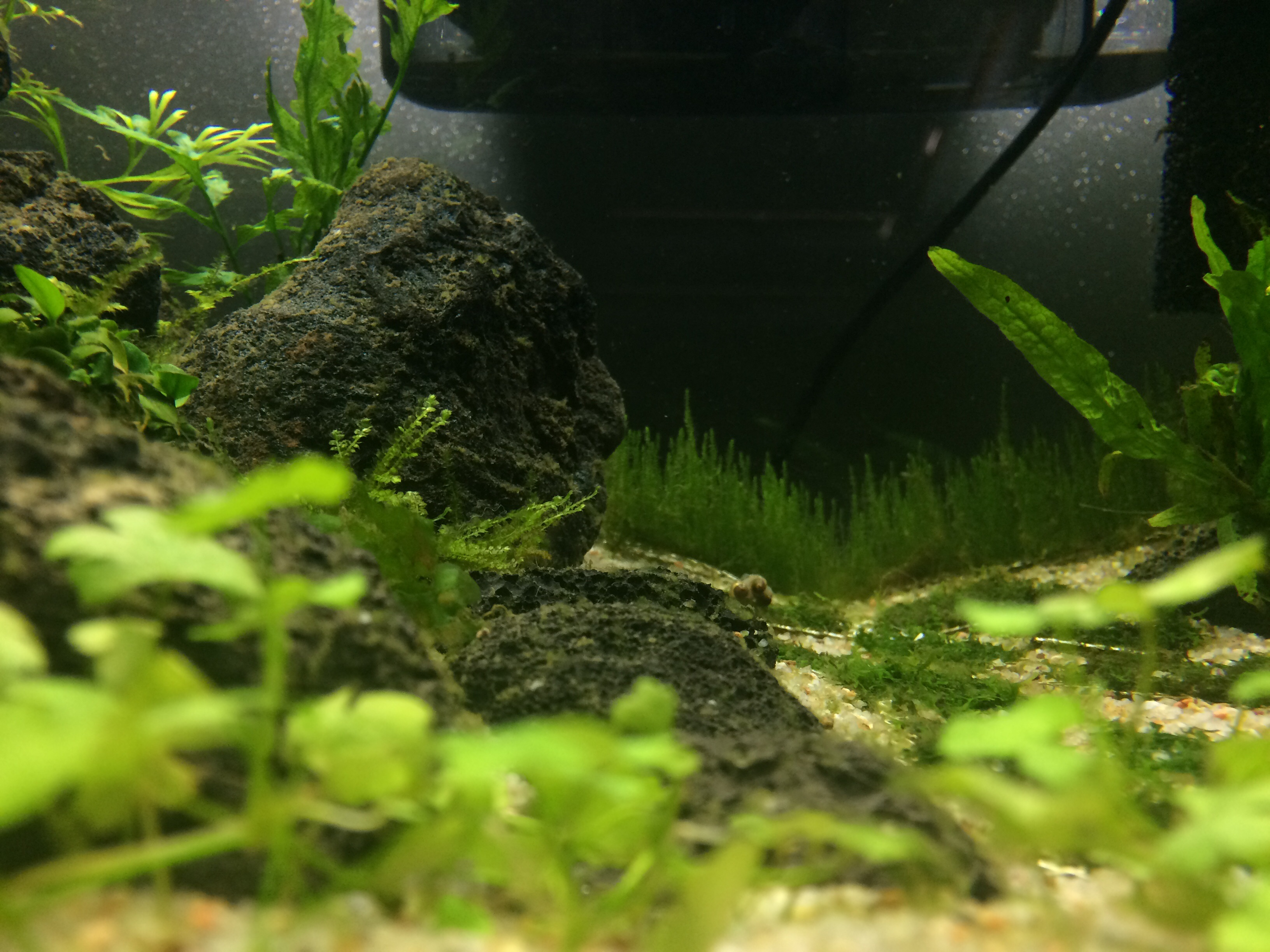 Tiny Secret World (arrivée des crevettes p.3 :D) - Page 2 629720image843