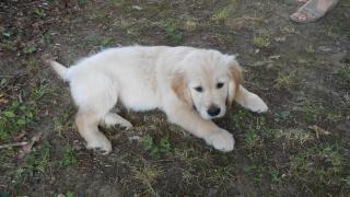 Avant de choisir son premier chien - Page 5 630002DSCN1082