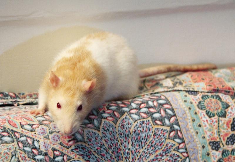 Radius cherche une belle ratoune ! 631819Radius3BD