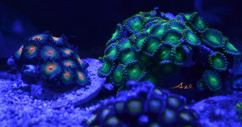 Mon premier aquarium eau de mer - Page 4 632081ZoZo