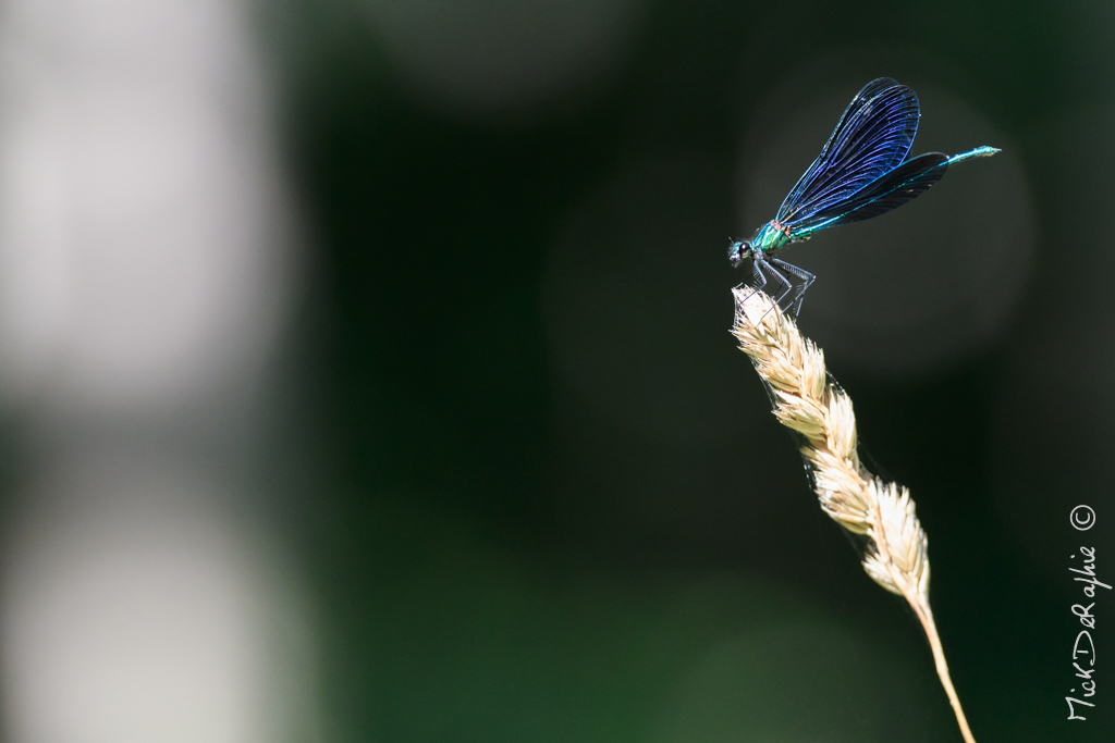 Insectes et Proxi. [Fil Ouvert] 641659T5600x372800221