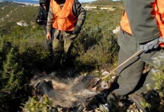 Ouverture de la chasse... snif - Page 3 649957581