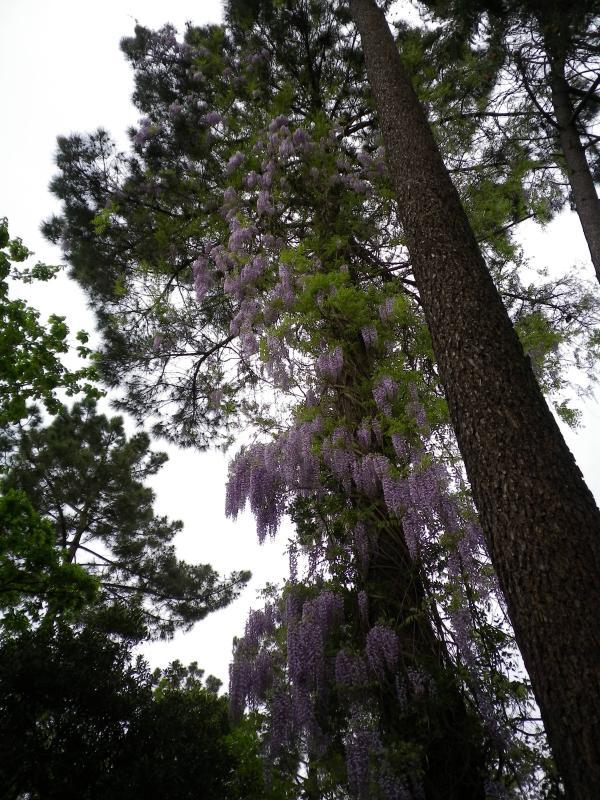 Quelques floraisons 650242IMGP1442