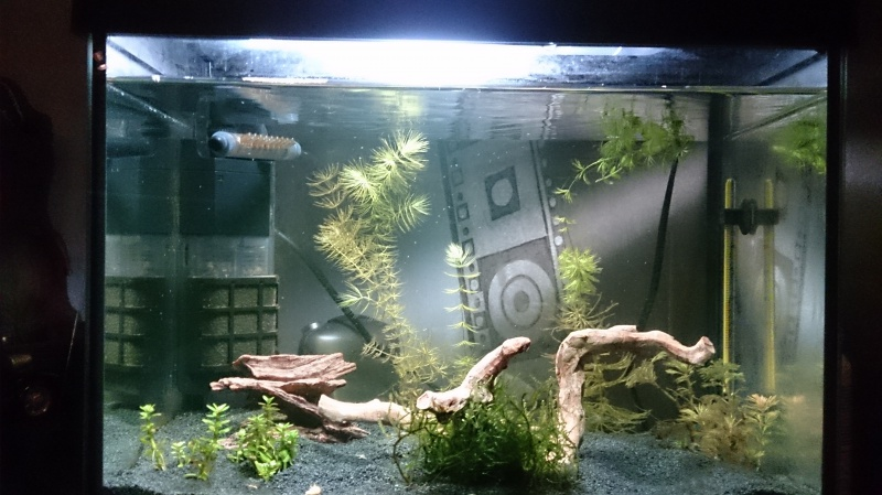 Mon aquarium 20L pour crevettes - Page 2 652767DSC01791