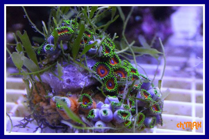 ce que j'amène en coraux a orchie  653175PXRIMG0010GF
