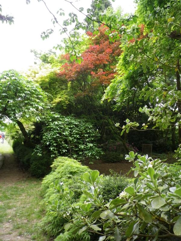 (40) Plantarium et chemin de ronde - Gaujacq - Page 2 655522IMGP4531