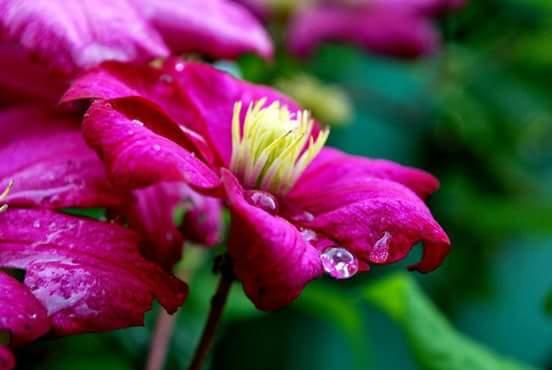 fleurs de la nature - Page 2 656160FBIMG1447361633294