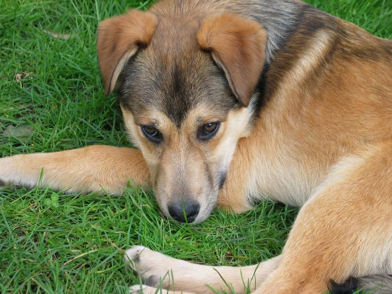 Chippy, chiot male, 3 mois, trouve sur le champ  656594IMG8113
