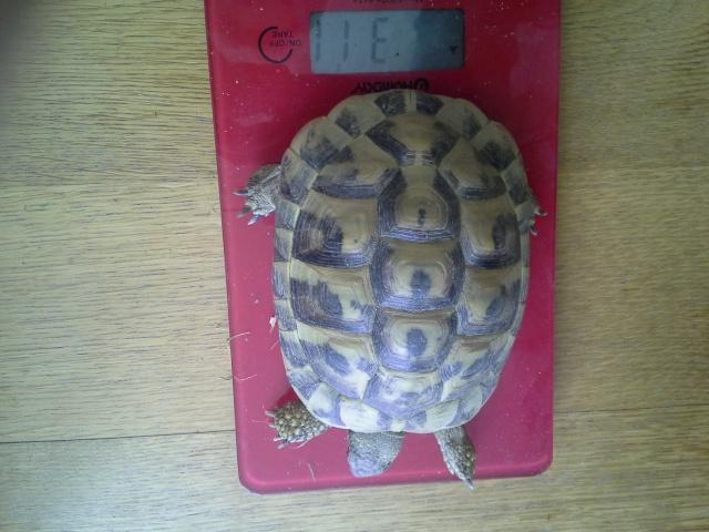 Mes nouvelles tortues 659551201404271611431