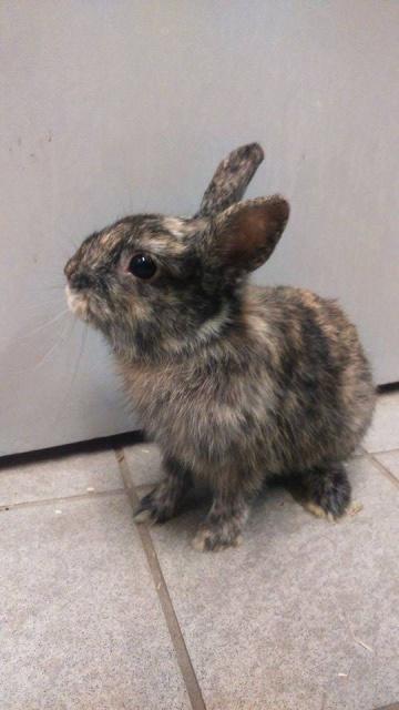 Urgence avant euthanasie - 2 lapins mâles 66134913124480516121981906475426067841144170024n