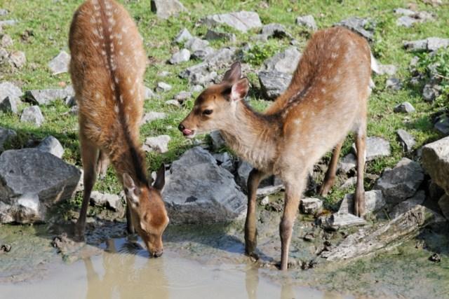 Zoo du Pal (Allier: Dompierre sur Besbre) 661370IMG_5901_DxO__640x480_