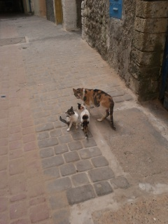 Essaouira.... 66821320120819120649