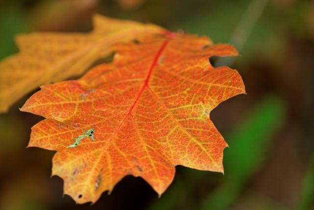 Les couleurs de l'automne 668855IMG_7541_DxO__640x480_