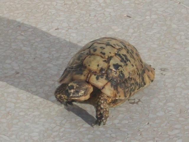nouvelle tortue ! 668901DSCF1301