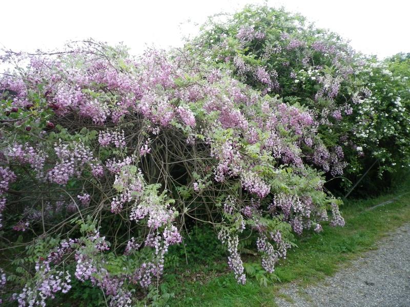(40) Plantarium et chemin de ronde - Gaujacq 672474IMGP4508